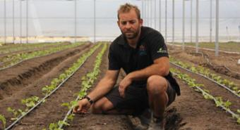 Greenhouses the solution to vegetable crop hopes for WA's wheatbelt
