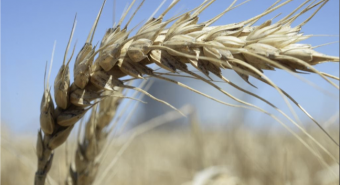WA Push for Carbon Neutral Grain