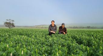 Wide Open Agriculture (ASX:WOA) progresses lupin protein