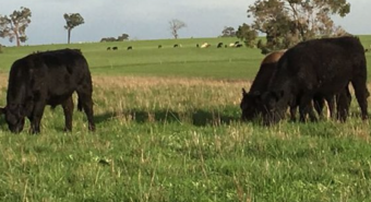 Wide Open Agriculture's Dirty Clean Food forks up 46pc revenue increase